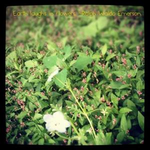 EarthFlowerQuote