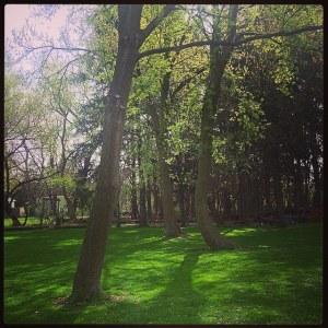Grove in Spring